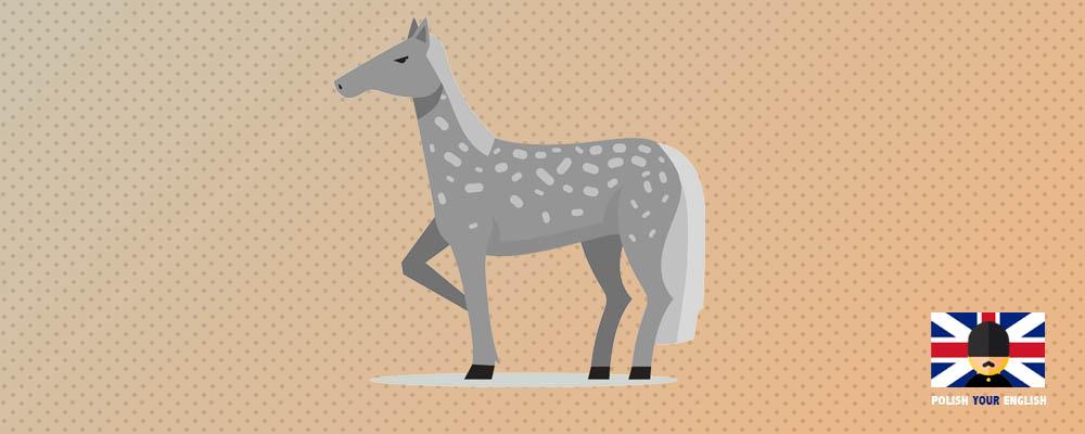 Hold your horses i inne idiomy związane z końmi